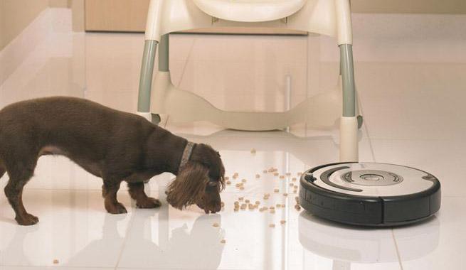 Nuevo robot para acabar con el pelo de las mascotas - Acabar con las pulgas en casa ...